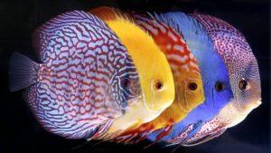 Основные правила торговли аквариумными рыбками в 2019 году